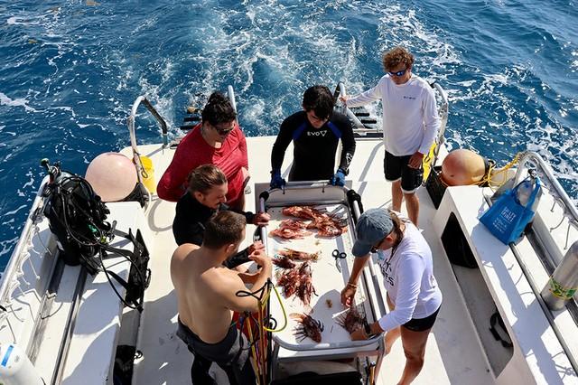 Measuring lionfish (1).jpg