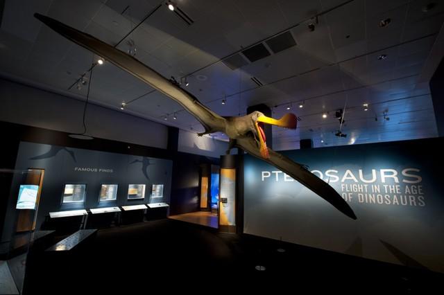 Pterosaurs entrance.jpg