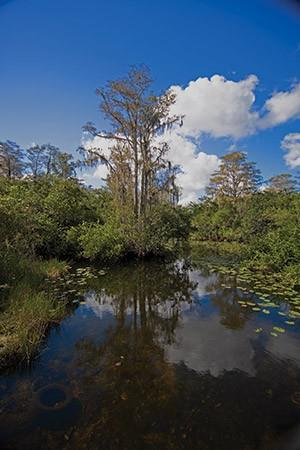 The incomparable Louisiana bayou.