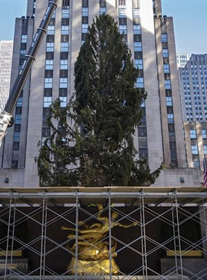 Rockefeller-Center-Tree2.jpg