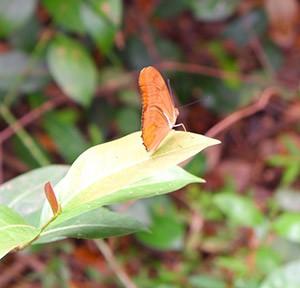 DHT-Butterfly.jpg