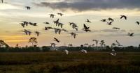 Big Cypress National Preserve Birds Flying.jpg