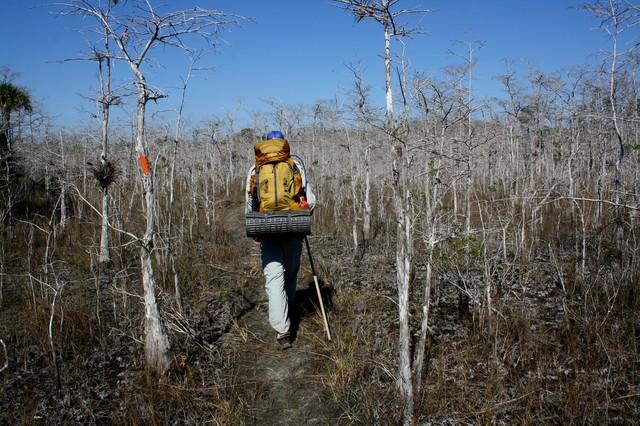 Big Cypress National Preserve Hiking on the Florida Trail.jpg