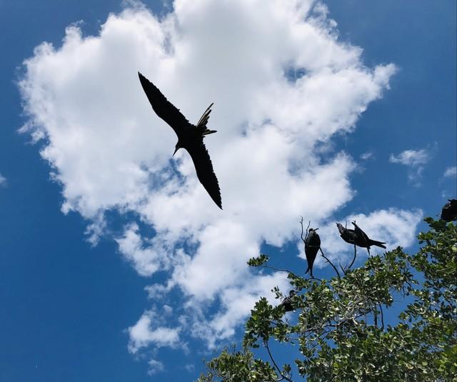BT Birds.jpg