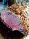 perfect medium rare with great -au-jus- in the dish.jpg